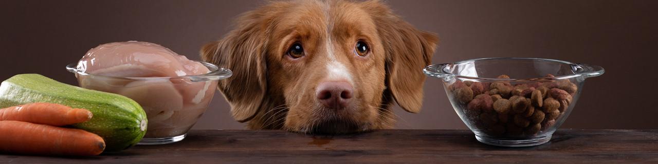 Hundeernährungsberater-Ausbildung im WIFI